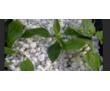 Агроперлит- добавка дляроста растений, фото — «Реклама Севастополя»