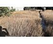 """Продам земельный участок в СНТ """"Березка"""" в Молочной Балке, фото — «Реклама Севастополя»"""