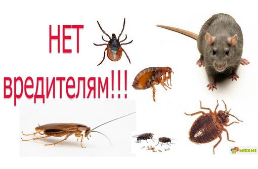 Уничтожение насекомых и грызунов. Белогорск, фото — «Реклама Белогорска»