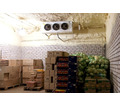 Холодильные камеры для хранения овощей, кратофеля, лука, капусты, - Продажа в Саках