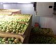 Холодильный Склад для Овощей. Холодильные Установки., фото — «Реклама Джанкоя»