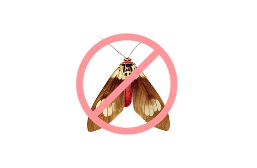 Дезинсекция! Уничтожение моли в Алупке! Гарантия 100 % результата! Безопасно! Без запаха!Жмите!, фото — «Реклама Алупки»