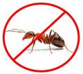 Дезинсекция! Уничтожение муравьев в Алупке! Гарантия 100 % результата! Безопасно! Без запаха!Жмите! - Клининговые услуги в Алупке