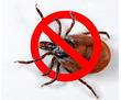 Дезинсекция! Уничтожение клещей! Акарицидная обработка Алупка! Гарантия 100 % результата! Безопасно!, фото — «Реклама Алупки»