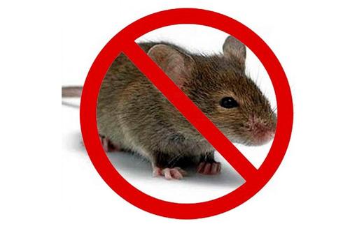 Дератизация! Уничтожение мышей в Алупке! Умирают на улице! Без запаха! Безопасно! Жмите!, фото — «Реклама Алупки»