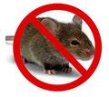 Дератизация! Уничтожение мышей в Алупке! Умирают на улице! Без запаха! Безопасно! Жмите! - Клининговые услуги в Алупке