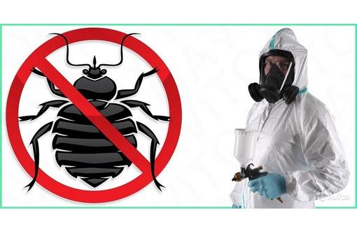 Дезинсекция! Уничтожение клопов в Алуште! Гарантия 100 % результата! Безопасно! Без запаха!Жмите!, фото — «Реклама Алушты»