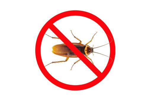 Дезинсекция! Уничтожение тараканов в Алуште! Гарантия 100 % результата!Безопасно! Без запаха! Жмите!, фото — «Реклама Алушты»
