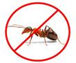 Дезинсекция! Уничтожение муравьева в Алуште! Гарантия 100 % результата!Безопасно! Без запаха! Жмите!, фото — «Реклама Алушты»