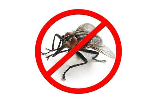 Дезинсекция! Уничтожение мух в Алуште! Гарантия 100 % результата! Безопасно! Без запаха! Жмите!, фото — «Реклама Алушты»