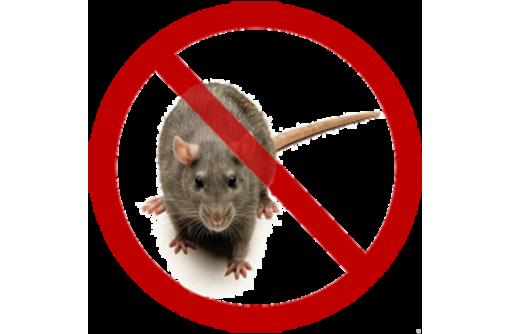 Дератизация! Уничтожение крыс в Алуште! Умирают на улице! Без запаха! Безопасно! Жмите!, фото — «Реклама Алушты»