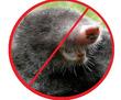 Дератизация! Уничтожение кротов в Алуште!  Без запаха! Безопасно! Жмите!, фото — «Реклама Алушты»