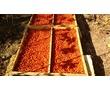 Шиповник ТАВРИЧЕСКИЙ сушеный, фото — «Реклама Белогорска»