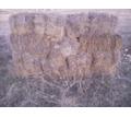 Сено в тюках, прошлогоднее - Сельхоз корма в Черноморском