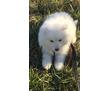 милые  щенки ищут  новый дом ., фото — «Реклама Белогорска»