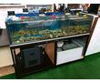 Витрина аквариум для устриц, крабов, омаров, гребешков и морепродуктов. Продажа и изготовление, фото — «Реклама Севастополя»