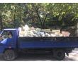 НЕДОРОГИЕ грузоперевозки,переезды,грузчики.Вывоз мусора,хлама,веток,травы,колючек.Работаем 24/7, фото — «Реклама Севастополя»