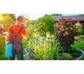 Срочно требуются работники зеленого хозяйства - Сельское хозяйство, агробизнес в Севастополе