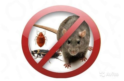 Уничтожение тараканов, грызунов, плесени, фото — «Реклама Севастополя»
