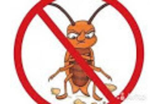 Профессиональное уничтожение грызунов, фото — «Реклама Красногвардейского»