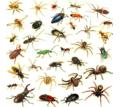 Уничтожение тараканов, блох, крыс до полного выведения - Клининговые услуги в Армянске