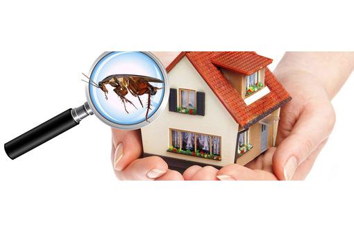 Полное уничтожение насекомых и грызунов, фото — «Реклама Белогорска»