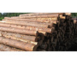 Продам лес кругляк хвойный и березовый, фото — «Реклама Черноморского»