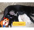 Питомник Light Soul Diamond - Собаки в Белогорске