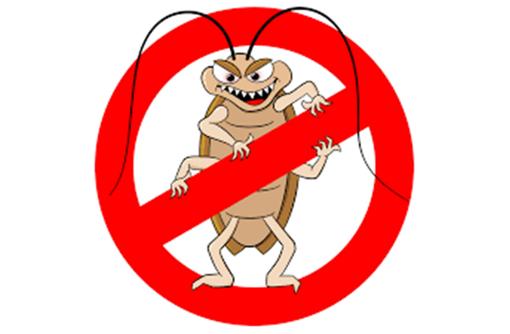 Дератизация, дезинсекция, дезинфекция. Уничтожение насекомых и грызунов., фото — «Реклама Алупки»