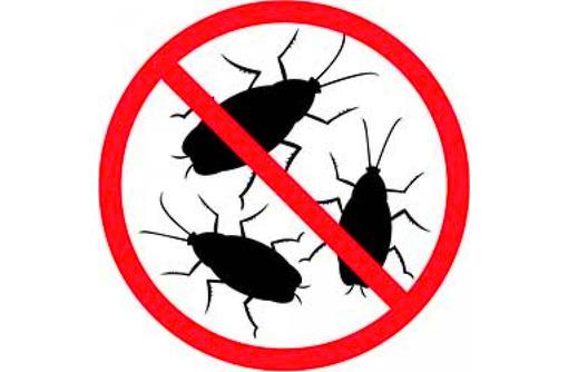 Дератизация, дезинфекция, дезинсекция. Уничтожение насекомых и грызунов. Дезинфектор., фото — «Реклама Алушты»
