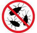 Дератизация, дезинфекция, дезинсекция. Уничтожение насекомых и грызунов. Дезинфектор. - Клининговые услуги в Приморском