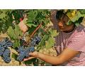 Рабочий на сельхозработы - Без опыта работы в Черноморском