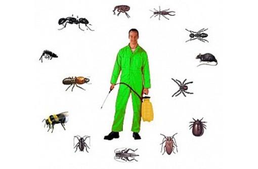 Уничтожение насекомых и грызунов. Дезинфекция, дезинсекция, дератизация. Профессионал Дезинфектор., фото — «Реклама Армянска»