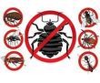 Уничтожение насекомых и грызунов. Дезинфекция, дезинсекция, дератизация. Профессионал Дезинфектор., фото — «Реклама Белогорска»