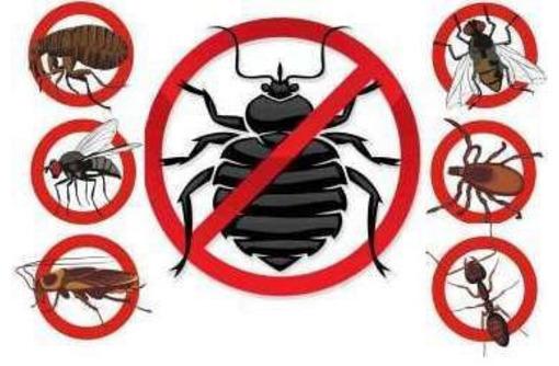 Уничтожение насекомых и грызунов. Дезинфекция, дезинсекция, дератизация. Профессионал Дезинфектор., фото — «Реклама Партенита»