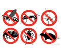 Уничтожение насекомых и грызунов. Дезинфекция, дезинсекция, дератизация. Профессионал Дезинфектор. - Клининговые услуги в Коктебеле