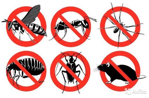 Уничтожение насекомых и грызунов. Дезинфекция, дезинсекция, дератизация. Профессионал Дезинфектор., фото — «Реклама Севастополя»