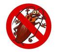 Профессиональные услуги дезинфектора. Уничтожение грызунов, насекомых и микроорганизмов. Дезинфекция - Клининговые услуги в Бахчисарае