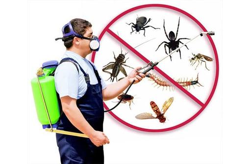 Дезинфекция, дератизация-уничтожение грызунов, дезинсекция-уничтожение насекомых. Дезинфектор., фото — «Реклама Алупки»