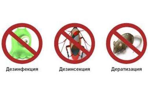 Дезинфектор. Уничтожение тараканов, клопов, клещей, муравьёв, ос, пауков, мышей, крыс, кротов., фото — «Реклама Алупки»