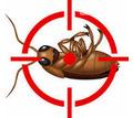 Дезинфекция, дератизация, дезинсекция. Уничтожение тараканов, клещей, клопов, мышей, крыс, кротов - Клининговые услуги в Алупке