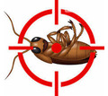 Дезинфекция, дератизация, дезинсекция. Уничтожение тараканов, клещей, клопов, мышей, крыс, кротов - Клининговые услуги в Коктебеле