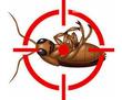 Дезинфекция, дератизация, дезинсекция. Уничтожение тараканов, клещей, клопов, мышей, крыс, кротов, фото — «Реклама Партенита»