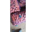 Оптовая продажа моркови в г. Севастополе - Эко-продукты, фрукты, овощи в Севастополе