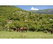Продается участок 25 соток в селе Родниковое, Байдарская Долина, фото — «Реклама Севастополя»