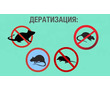 Дератизация. Полное уничтожение крыс, мышей, кротов и других грызунов, фото — «Реклама Красногвардейского»