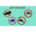 Дератизация. Полное уничтожение крыс, мышей, кротов и других грызунов - Клининговые услуги в Красногвардейском