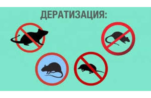 Дератизация. Полное уничтожение крыс, мышей, кротов и других грызунов, фото — «Реклама Партенита»