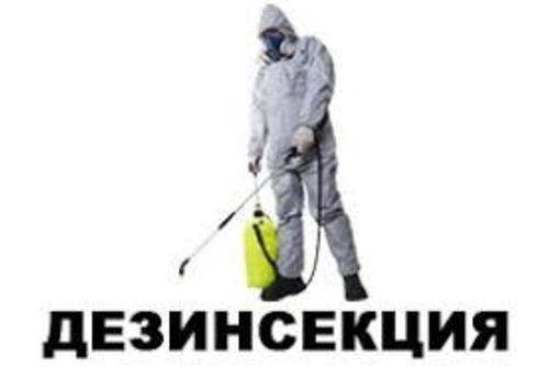 Дезинсекция.  Уничтожение насекомых. Профессиональные услуги Дезинфектора., фото — «Реклама Алупки»