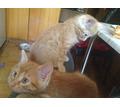 Отдам в добрые руки - Кошки в Крыму